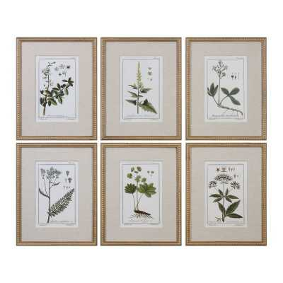 'Floral Botanical Study' 6 Piece Framed Graphic Art Set - Wayfair