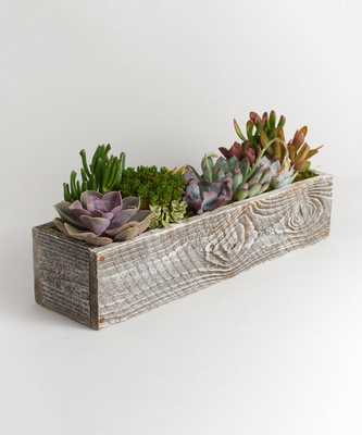 KIMBERLEE WOOD RECTANGLE PLANTER WITH SUCCULENTS, WHITE, SMALL - Lulu and Georgia