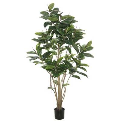 Rubber Foliage Tree in Pot - Wayfair