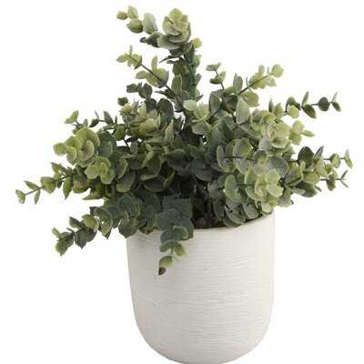 Texture Eucalyptus Plant in Planter - Wayfair