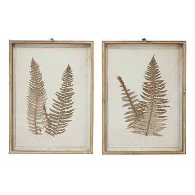 Large Vintage Fern Illustrations Framed Botanical Prints Wall Art Set - Wayfair