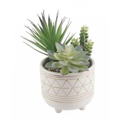 Garden Geo Succulent Plant in Pot Set - Wayfair