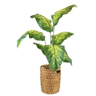 Floor Palm Plant in Basket - Wayfair