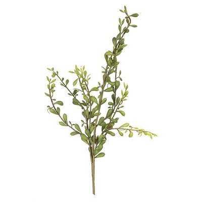 Pick Succulent Plant - Wayfair