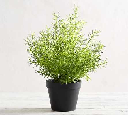 Faux Potted Ferns, Asparagus - Medium - Pottery Barn