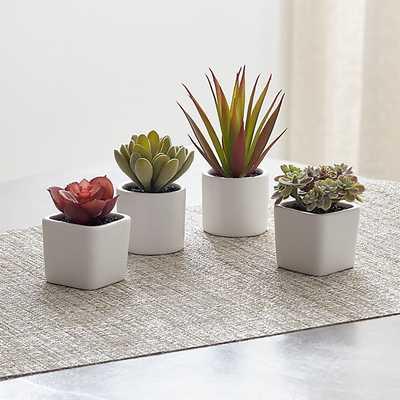 Mini Potted Succulents, Set of 4 - Crate and Barrel