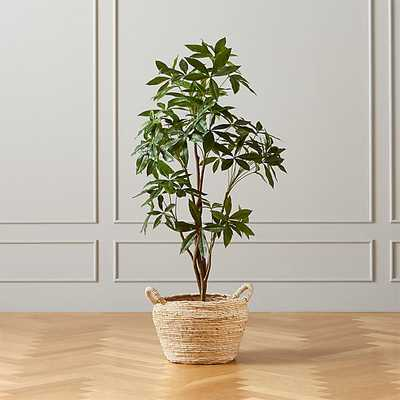 FAUX MONEY TREE WITH COBRA BASKET - CB2