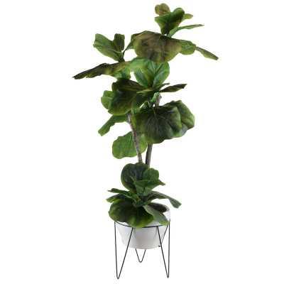 Fiddle Leaf Fig Plant in Pot - Wayfair