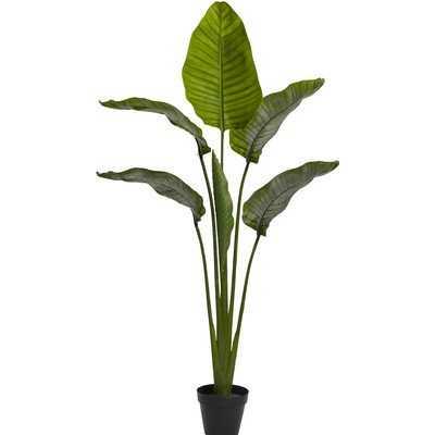 Travellers Palm Tree in Pot - AllModern