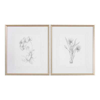 BOTANICAL SKETCHES FRAMED PRINTS, S/2 - Hudsonhill Foundry
