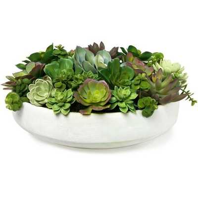 SUCCULENT MIXED CENTERPIECE IN LOW BOWL - Perigold