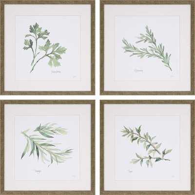 'Herbs' 4 Piece Framed Graphic Art Print Set - Birch Lane