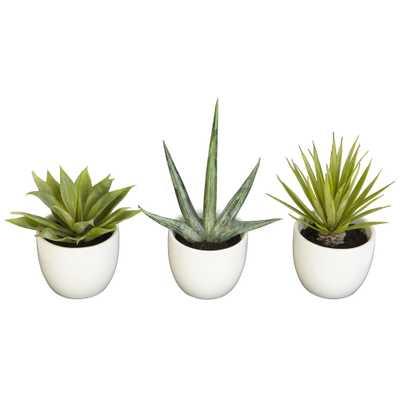 Faux Southwest Succulent Collection, Set of 3 - Fiddle + Bloom