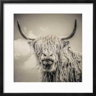 Highland Cattle - 16 x 16 - art.com