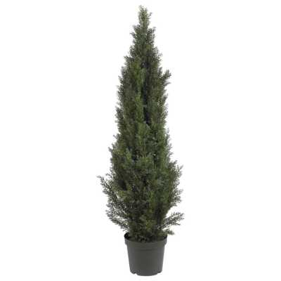 5' Mini Cedar Pine Tree - Fiddle + Bloom