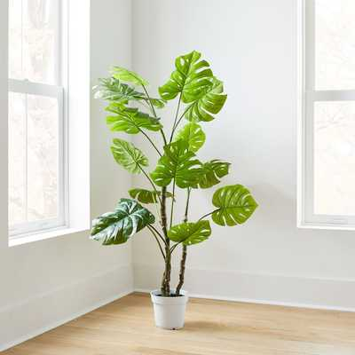 Faux Potted Monstera - West Elm