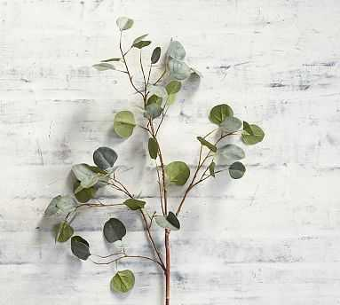 Faux Silver Dollar Eucalyptus Branch - Pottery Barn