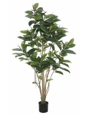 "Rubber Foliage Tree in Pot 72""H - Wayfair"