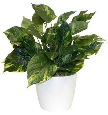 Ivy Floor Plant in Decorative Vase - AllModern