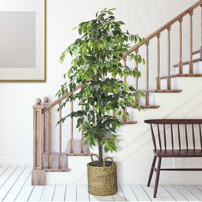 "72"" Ficus Tree in Basket - Wayfair"