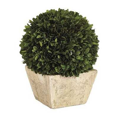 Preserved Boxwood Topiary - Large Dome - Ballard Designs