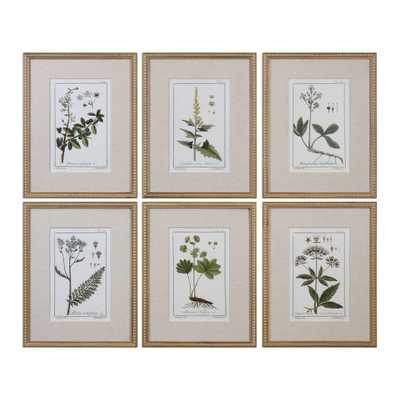 Green Floral Botanical Study, S/6 -18  X 23  -Framed (Gold) - With Mat - Hudsonhill Foundry