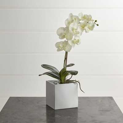 Large Potted Orchid Plant - Crate and Barrel - Crate and Barrel