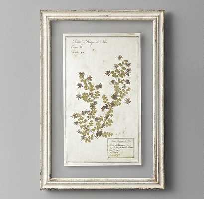 PRESSED BOTANICAL ART, PURPLE CHRYSANTHEMUM - RH Baby & Child