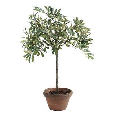 "Olive Topiary - 28"" - Ballard Designs"