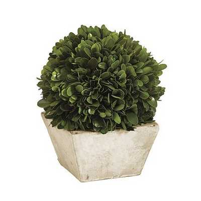 Preserved Boxwood Topiary - Small Dome - Ballard Designs