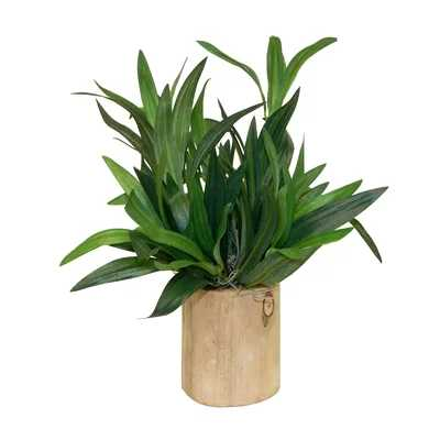 Spider Plant in Decorative Vase - Wayfair
