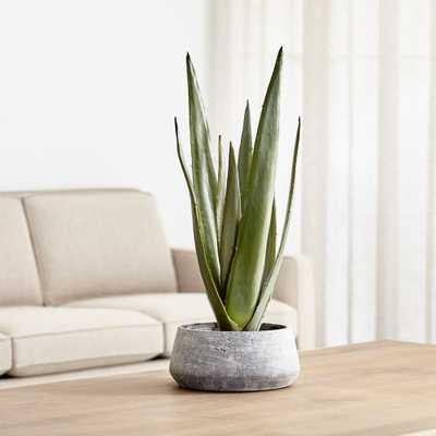 Faux Potted Agave - Crate and Barrel