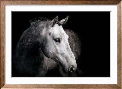 HORSE - art.com