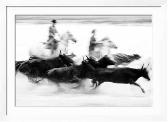 Black Bulls of Camargue and their Herders Running Through the Water, Camargue, France - art.com