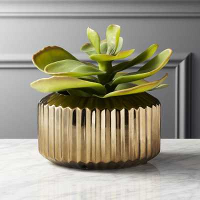 Potted Faux Succulent Gold Pot - CB2