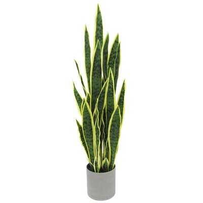 Sansevieria Snake Plant in Planter - Wayfair