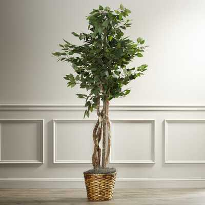 Maura Executive Ficus Tree in Basket - Wayfair