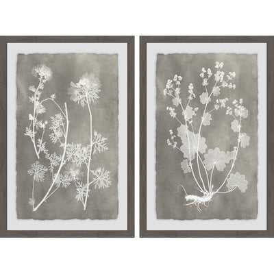 'Herbarium Study Diptych' 2 Piece Framed Graphic Art Print Set - Birch Lane