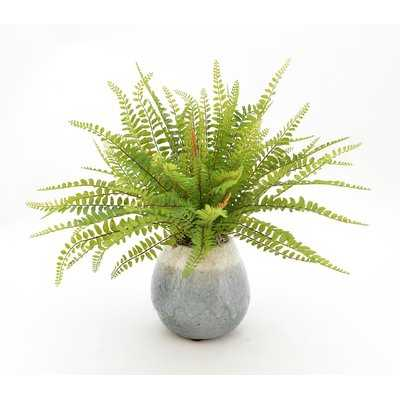 Faux Fern in Ceramic Vase - Birch Lane