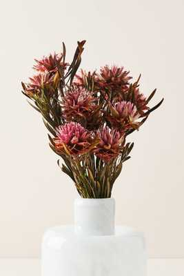 Dried Plumosum Bouquet - Anthropologie