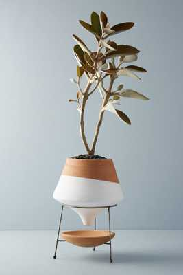 Dipped Clay Pot + Stand - Anthropologie