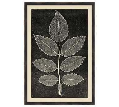 Leaf Detail 3 - 15 x 22 - Pottery Barn