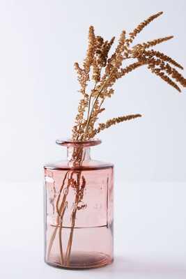 Apothecary Jar - Anthropologie