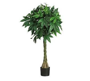 Faux Potted Braided Money Tree - Pottery Barn