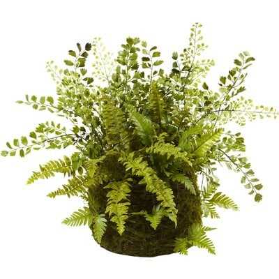 Mixed Fern Plant in Basket - Birch Lane