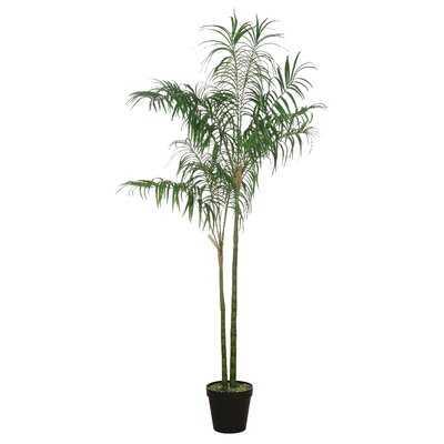 Palm Tree in Pot - Wayfair