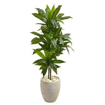 Artificial Floor Dracaena Plant in Planter - Wayfair