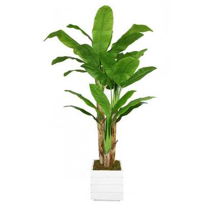78 in. Tall Banana Tree with Real Touch Leaves in 14 in. Fiberstone Planter, White - Home Depot