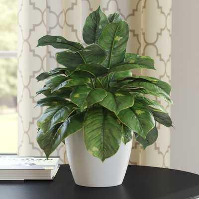 Ivy Floor Plant in Decorative Vase - Wayfair