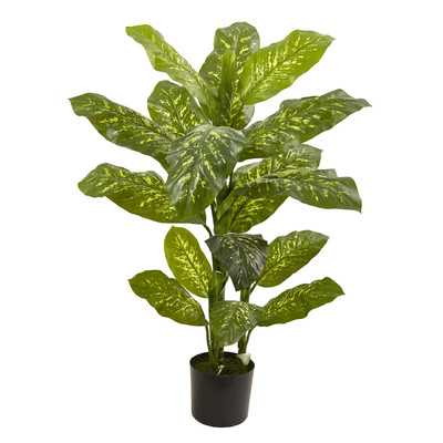 Dieffenbachia Floor Plant in Pot - Wayfair